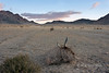 Road from Olgii to Khovd at sunrise with goat skull, near Khovd, Western Mongolia