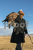 Kazakh eagle trainer carrying his eagle to his horse<br /> <br /> On the steppes, near Olgii, Western Mongolia