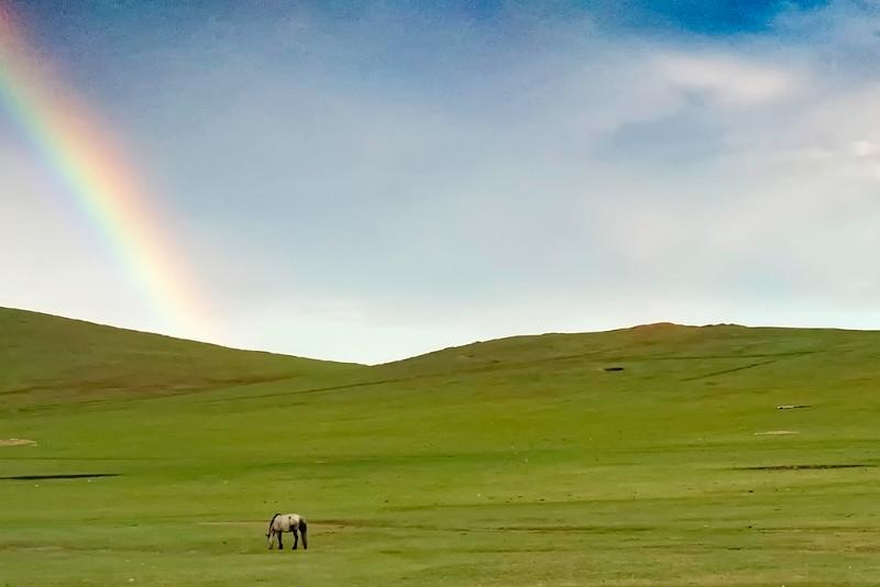 Mongolia's horses