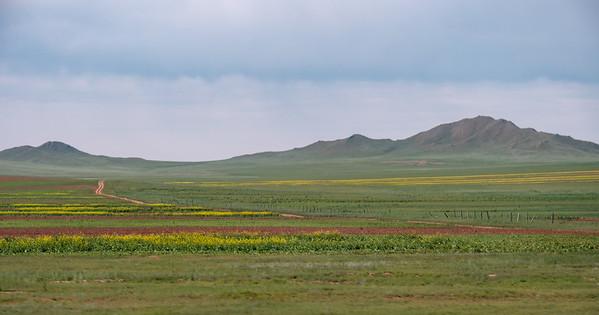 Central Mongolian grasslands