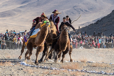 Bactrian Camel Races at the Eagle Festival