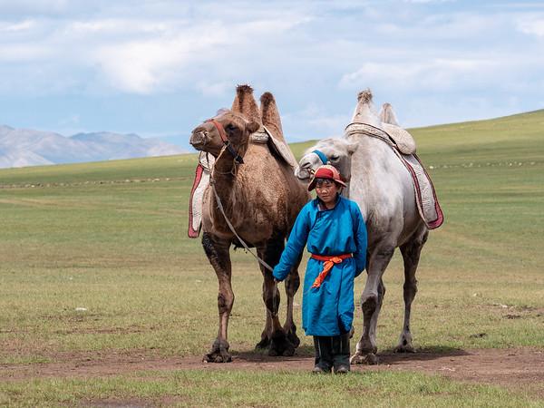 Boy leading camels