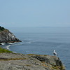 Seagull and Headlands, Monhegan, Maine