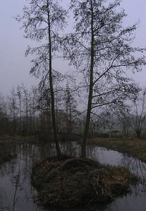 Monimail Pond