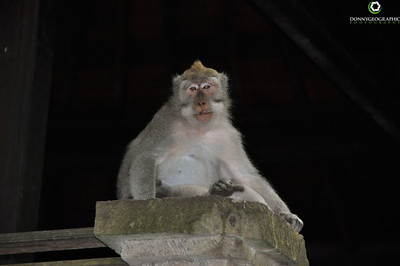 The monkey forest In Bali
