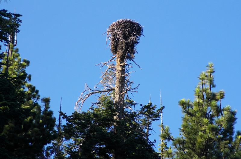 Presumably an Eagles nest--one of two along the Eastern Shore of Edison Lake close to the spillway.