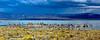 """""""Approaching Storm, Mono Lake"""""""