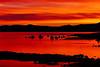 """""""Crimson Sunrise"""""""