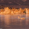 Tufa formations blaze orange in the morning sun on Mono Lake.