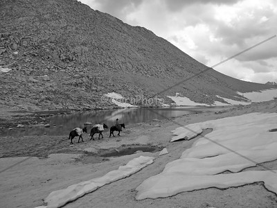 Mule train crossing Mono Pass.  Black and White.