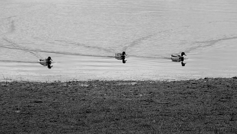 Pow Fill and Derwent Reservoir