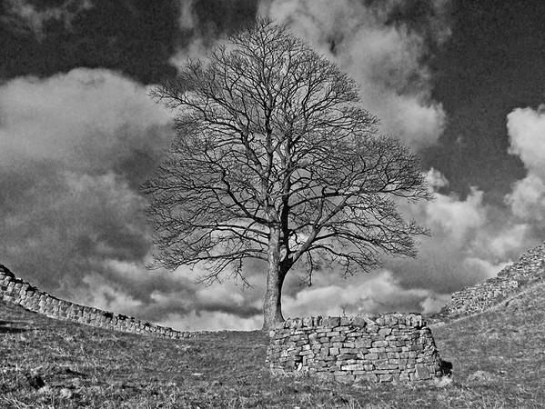 Sycamore Gap,Hadrians Wall 2006