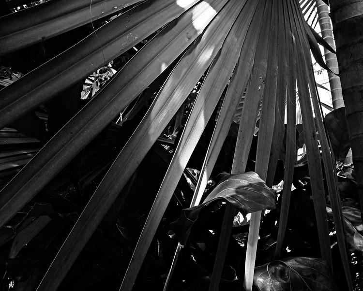 CH000863 Kew Gardens MONO