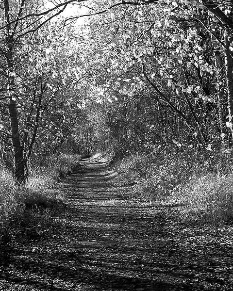 Autumn walk around Low Barns.