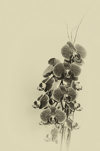 Orchids 7-8-14 mono III