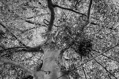 Canopy, mono abstract