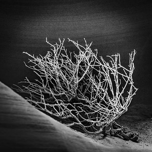Tumbleweed In Slot Canyon