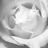 JeanR_2_Rose B&W