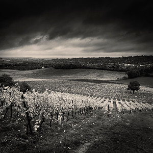 Denbies Wine Estate, Dorking, Surrey