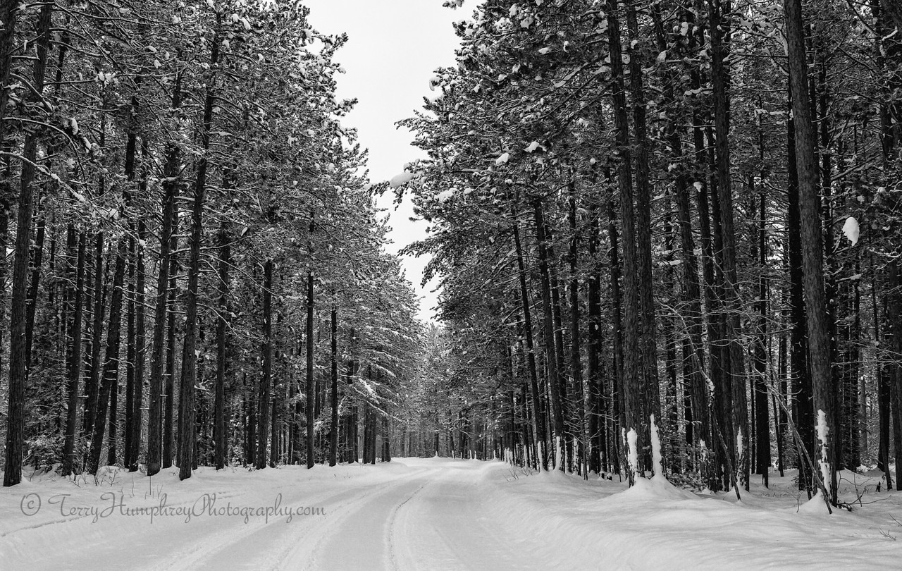 IMAGE: http://www.terryhumphreyphotography.com/UP-Here/Life-in-the-Northwoods/i-7m2BFP8/0/X2/IMG_0039-Edit-X2.jpg