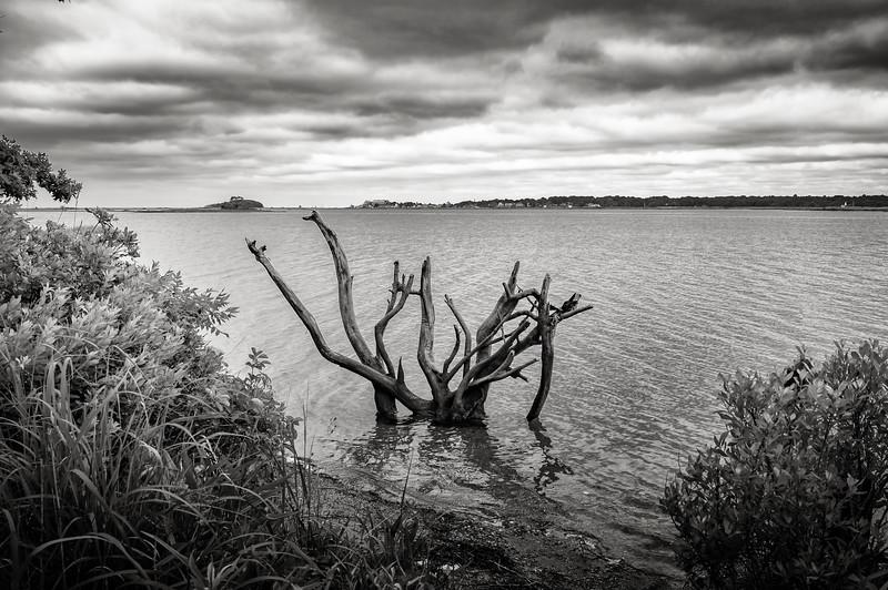 Lake Creature, Bluff Point, Groton
