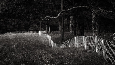 Ragged Fence, Worthington, MA