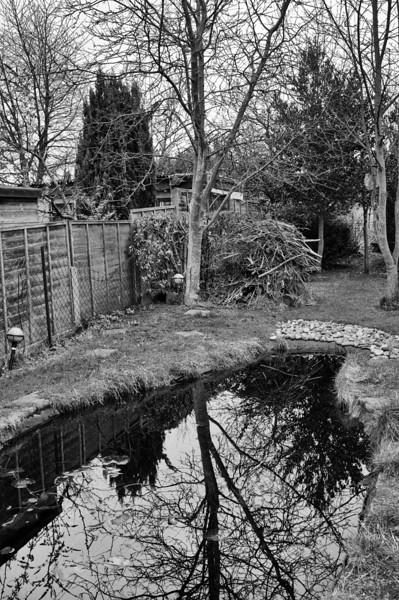 My garden pond in my garden with reflections