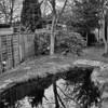 My garden pond in my garden with reflections