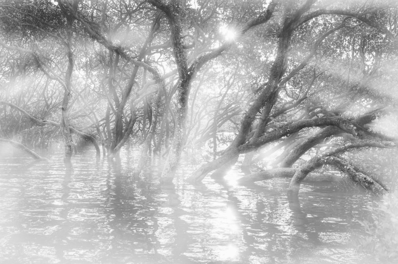 Mangrove Obscurity BW