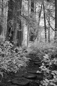 The day we spent at Neah Bay was the only day that the sun really came out, but of course it made for some major contrasty light.  I opted to pull the Fuji out and shoot in infrared, The Cape Flattery trail is spectacular and has a great trail made of stones and wooden boardwalks.