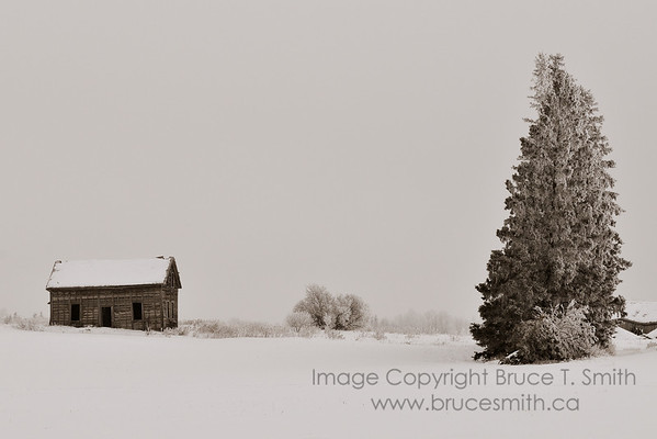 Abandoned house in the frost and snow