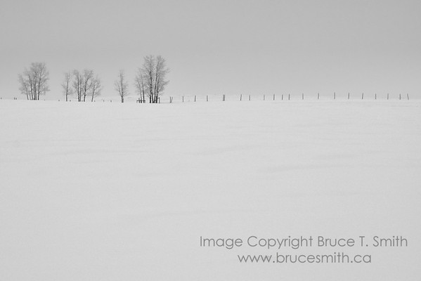A stand of trees and a fence in a snow-covered field