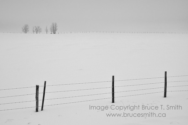 A farm field, barbed wire fences, and stand of trees in the winter
