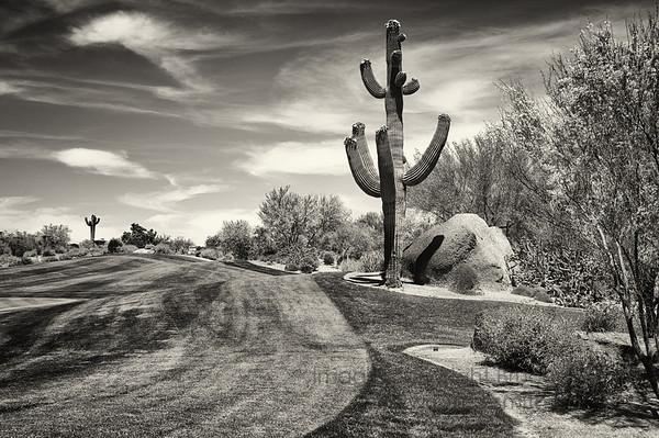 Desert Golf and Saguaro