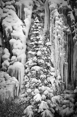 A snow-covered spruce tree in the mountains in winter, with a frozen waterfall in the background.
