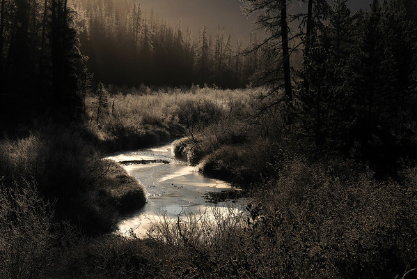 Hoarfrost and freezing creek in the Cariboo in central British Columbia