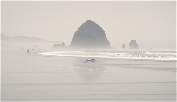 Oregon Coast in mono