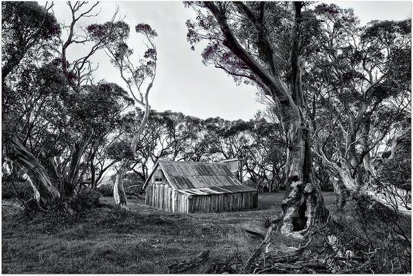 Wallace's Hut 1