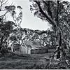 Wallace's Hut 2