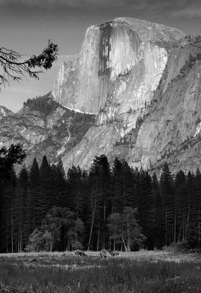 Evening Meadow, Yosemite