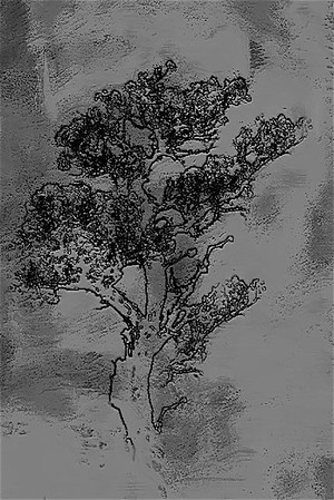 another tree ...