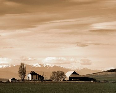 Smith Farm, on Ebey's Prairie, with Olympic Range in background