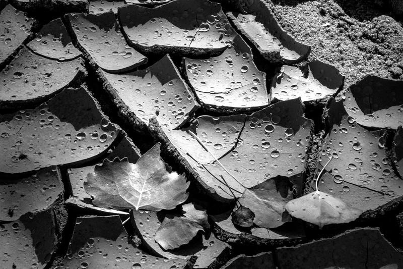 Dried mud and leaves