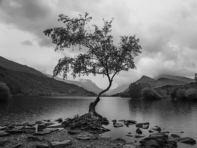 Lone Tree 2.