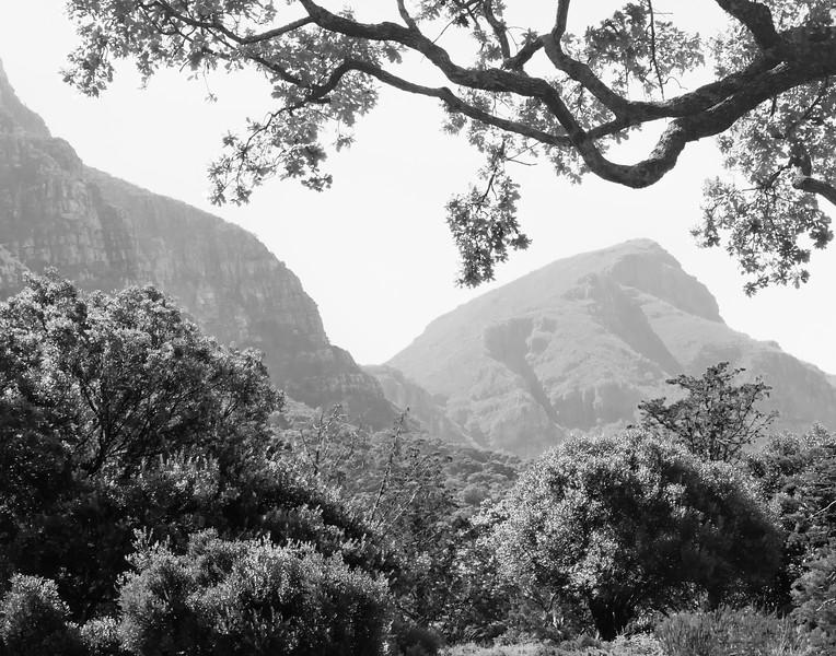 Mountains around Kirstenbosch Garden in Cape Town