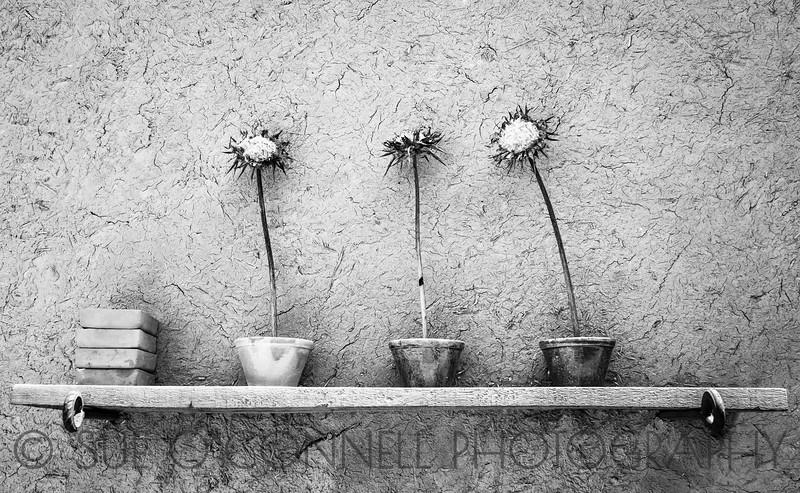 Three Ex-Flowers