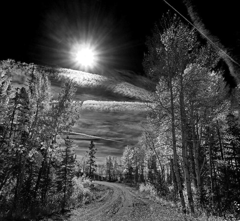 Colorado Aspens near Crested Butte