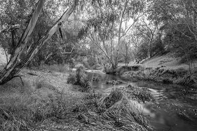 Arroyo Del Valle Trail - Pleasanton, CA, USA