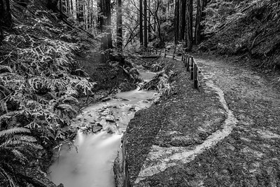 Redwood Creek & Coast Redwood (Sequoia sempervirens). Stream Trail. Redwood Regional Park - Oakland, CA, USA