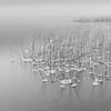 Alta Lake Reeds 1